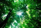 ser agente forestal