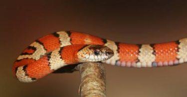 comprar serpientes